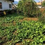 Our organic garden